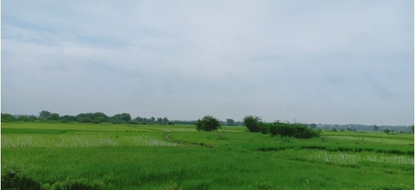 Selling my land of 2 vigha